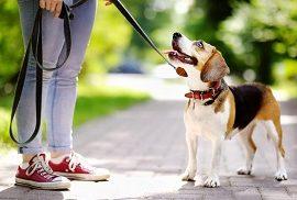 Как без нарушения закона выгуливать собаку в Перми